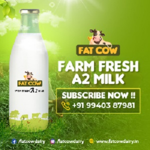 Fat Cow Milk Chennai